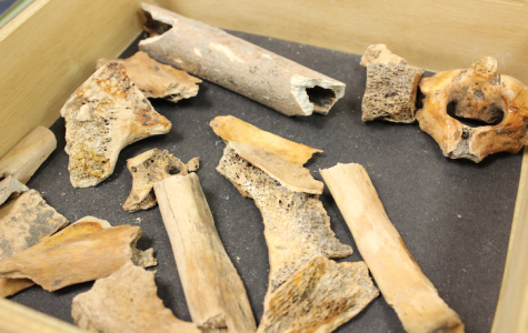 Box of bones discovered in Cal library