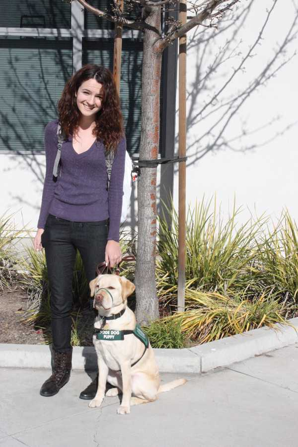 District bans guide dogs